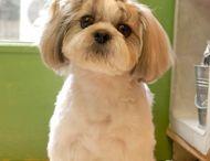 ❤️ perritos bellos