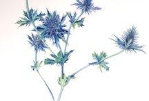 Printables Pflanzen