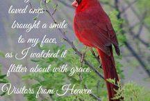 cardinals / by Micki Thompson