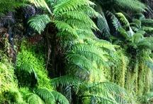 THEME / The Rainforest & Jungle