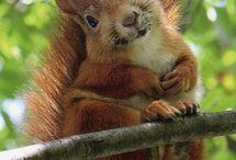 eekhoorntjes muisjes en nog meer moois....