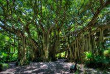 Florida sites