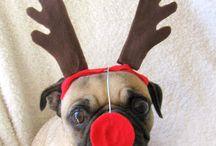 Christmas / Diy