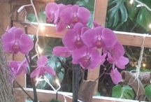 orchidee hoeve