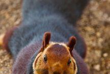Squirrels / by Susan Pletscher