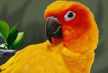 PARROTS & PET BIRDS / Parrots are such beautiful creatures. Here are some of my favorite pictures and websites.