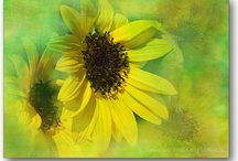 Sunflowers / by Erin King