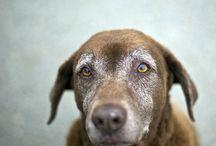 Doggies / by Maureen Strachan