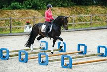 equine exercises / All the best horse exercise/training activity pins!