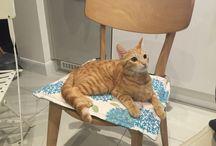 Marmalade / Cat