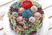 Succulent Cakes