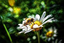 Abeilles Bees