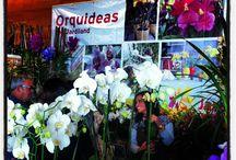 1ª Exposição de Orquídeas em Guimarães / A exposição realizou-se no Edifício Mitpenha nos dias 5 e 6 de Outubro/2013. Foi um sucesso!