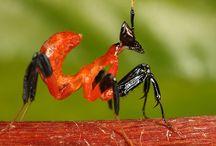 жуки и лигухи / bugs and frogs