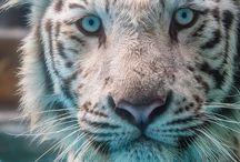 rawr / animals <3 / by Suzanne Blair