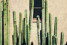 Cactus compositions