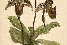 orchid print / by Sacha Kreeger