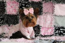 Yorkies / by Theresa n Dennis Pautler