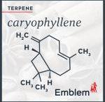 Cannabinoids & Terpenes