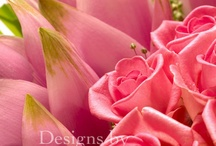 Feeling Pink! / Designs by David Ragg - photography by Mike Nicholson