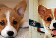 ¡Que caras! / Expresiones, caras y gestos de nuestros perros y gatos
