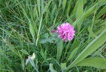 Wild Flowers Summer 2016