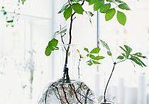 Binnen beplanting