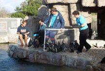 PENGUIN RESCUE | SAMREC pinguin opvang /  Volunteer at SAMREC South-Africa