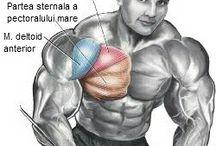 Gym/Fitness/Sport