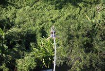 Reisverhaal: Bungee jumpen in Chiang Mai