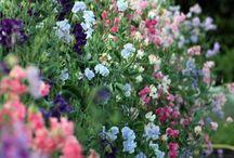plantas jardins campo