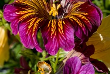 Flowers / by Carmen Sanabria