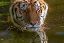 Wildlife / Images of wildlife from my journeys!