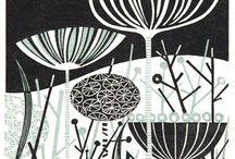 Seeds,Pods & Fungi..