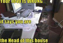 Pet Humor / Funny animal memes and jokes