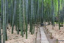 GARDEN - Bamboo / by Stefan Kruse