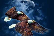 Eagle / Eagle