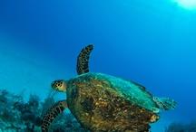 Grand Cayman Islands / by Layne Weichselbaum
