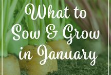 What to Sow & Grow