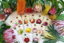 Protea Seeds
