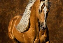 Horses / by Deborah  (loves John )