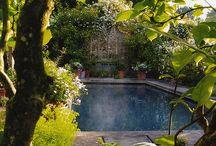 Ogrody. / rośliny i krzewy