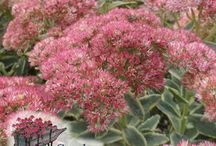 Drought Tolerant Plants / Plants that stand up to the heat of Summer. Drought Tolerant is where it is at!
