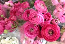 Ranunculus Flowers, Who Would Love A Bunch Wholesale?