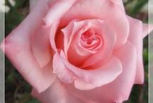 Flowers / by Anne Baird