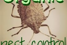 keep pests out of garden / by Meghan McCollum