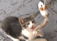 CATS / txutxu