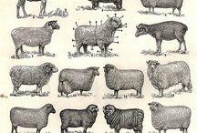 Sheeps / by Sara Venn