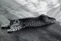 Fluff and fur / by Sara Jensen