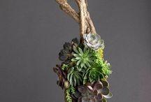 Plants and flower arrangements